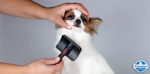 Capa de 'Pelo de cachorro: cuidados especiais'