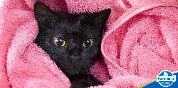 Capa de 'Banhos em gatos: seu pet cheiroso e saudável'