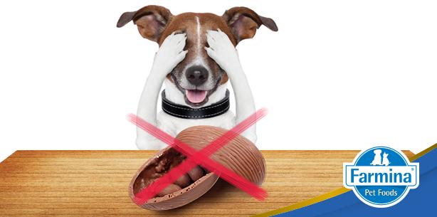 Capa de 'Páscoa: Não divida os doces com os seus pets!'