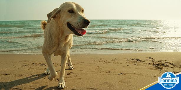 Capa de 'Praia e pet: conheça os riscos dessa combinação'