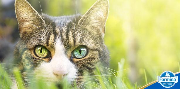 Capa de 'O que você precisa saber sobre o seu gato'
