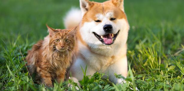 Capa de 'Câncer de pele: proteja o seu pet'