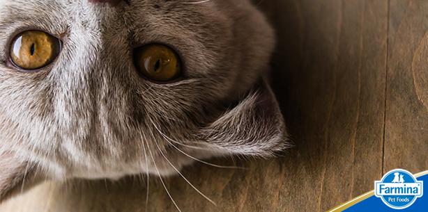 Capa de 'Gatos: misteriosos e cheios de manias'