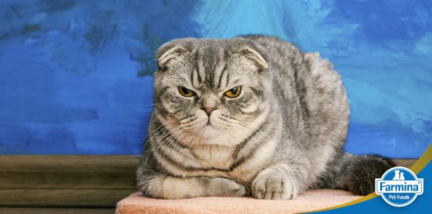 Capa de 'Agressividade em gatos: O que fazer? Quais as causas?'