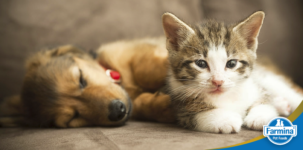 Capa de 'Peixe é saudável para cães e gatos?'