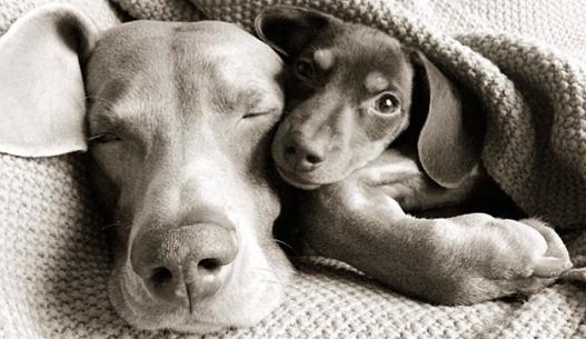 Capa de 'Mundo animal: amizade sem preconceito'