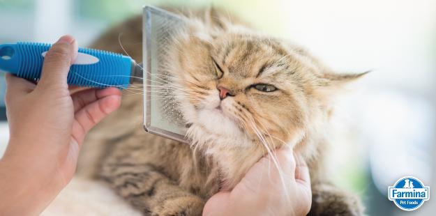 Capa de 'Escova para gatos: saiba o modelo certo'