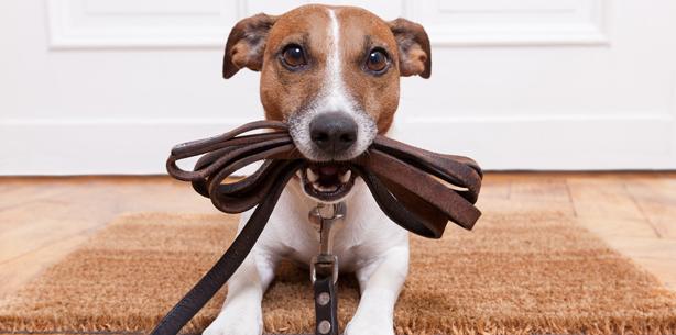 Capa de 'Mudança de hábito: aprenda a melhor forma de exercitar o cão'
