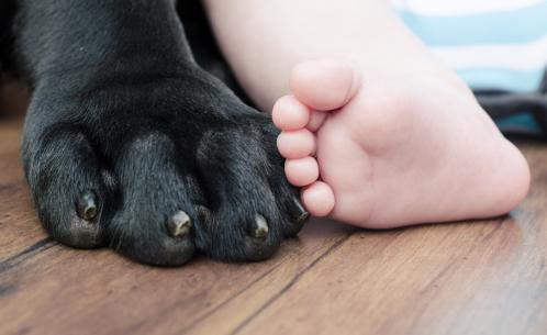 Capa de 'Pets e a chegada do bebê'