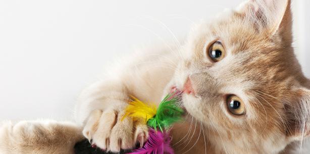 Capa de 'Unhas dos gatos: elas merecem cuidados especiais'