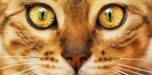 Capa de 'Gatos: raças exóticas e curiosas'