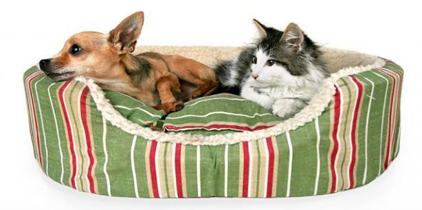 Capa de 'Mundo pet: decoração e acessórios cheios de charme!'
