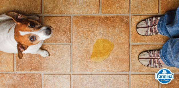 Capa de 'Tapete higiênico para cachorro: conheça as vantagens'