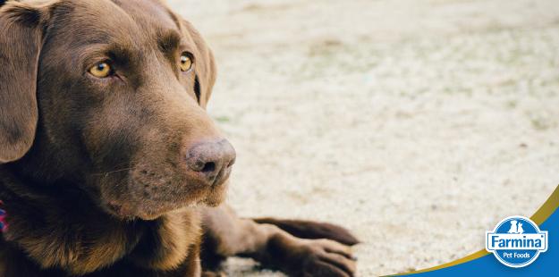 Nutrientes essenciais para pele e pelagem saudáveis em cães