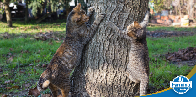 Capa de 'Hábitos saudáveis para evitar o sobrepeso em gatos'